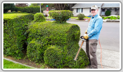 John Bemis keeps his train looking sharp. During the growing season, Bemis spends about four hours with trim and clean-up every 10 days to keep his topiary train in tip-top shape.